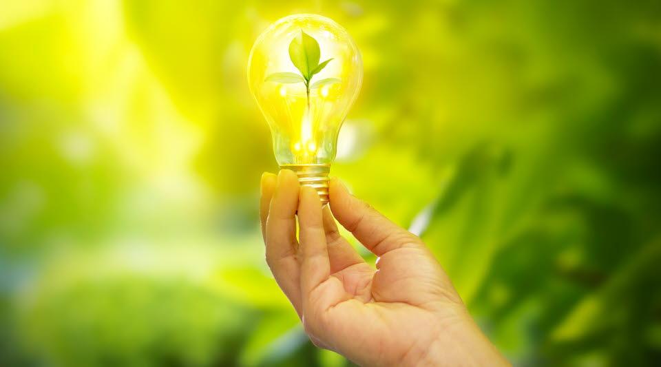 Hand håller i glödlampa med löv inuti